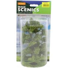 Acacia Tree 15cm